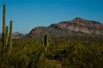 Saguaros und bizarre Bergformationen