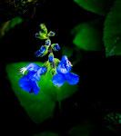 ....mit einer tollen Flora....