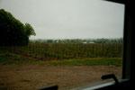 """Weingut in Beamsville - Blick aus unserem """"Bungalow"""""""