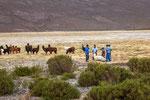 ...Lamaschur in der Pampa...