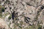 ...und noch einer - mit seinen tollen weiß-schwarzen Flügeln...