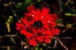 ...eine kleine Wiesenblume leuchtet einem schon aus 10 m Entfernung entgegen...