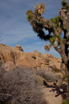 Joshua Tree und bizarre Felsformationen....