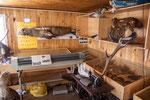 ...eine Schreibmaschine und ein Plotter neben ausgestopften Tieren...