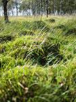 Moss Mounds