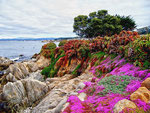 Monterey 1