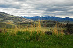 Yellowstone Nationalpark 4