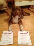 Rusty ist jetzt doppelt geprüfter Begleithund (BH- und BGH1 Prüfung)
