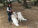 A lady and her four dogs