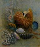 「静物(オウム貝)」F10 油彩