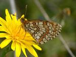 Melitaea deione (Männchen, derselbe Falter wie vorher) / E Region Valencia, Alcoy - Benasau 702 m, 04. 05. 2012