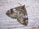 Chloroclysta truncata (Möndchenflecken-Bindenspanner) / CH VS Zinal 1675 m, 28. 07. 2009, Hotelanlage