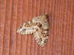 Trichopteryx polycommata (Gestrichelter Lappenspanner) / CH BE Brienzersee Iseltwald, Autoparkplatz, 28. 03. 2012