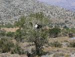 Dikti Lassithi Hochebene in Kreta (Lebensraum des oben fotografierten Falters)