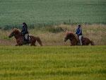 Für die 10-Kilometer-Strecke standen Pferd und Reiter 75 Minuten zur Verfügung. Diese Zeit musste möglichst genau eingehalten werden. Das war gut zu meistern.
