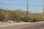 Saguaro am Wgesrand
