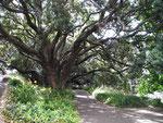 Ruhiger Park mitten in Auckland