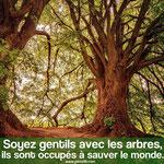Les arbres...