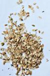 アシタバ。発芽率が低いので大量にまきます。南国で育つイメージですが、こちらの寒い冬を地下で越してくれる頑張り屋さんです。