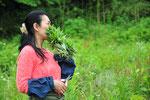 ヨモギは百種類ともいわれる品種があります。農園のヨモギも数種類あって、微妙に香りが違います。