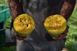 かぼちゃを割ったところ。今年は在来種の「すくなかぼちゃ」やバターナッツなど。