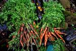 冬野菜も、間引いたものでも味わいがあります。