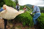 エンジン付きのトリマーで買った茶が自動的に袋に送り込まれていきます。