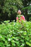 ドクダミもつかの間の花の季節が一番薬効が高いのです。この季節のドクダミだけを使います。
