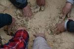 米ぬかぼかし。肥料というよりも、土づくりの潤滑油。醗酵煮もかかわる大事なものです。