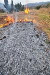 畑の枯草を焼きます。雑草の種を焼き、草の灰はミネラルが豊富な肥料にもなります。