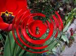 Die Wespe im Fokus