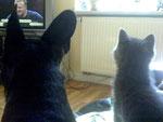 Bei mir sitzen Hund und Katze in der ersten Reihe
