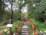 Treppe zum Blabjerg - Höchste Düne in Jütland