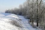 Winter in der Aue zwischen Burgliebenau und Lochau