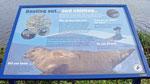 Am Croary Firth kann man mit etwas Glück Robben im Wasser bestaunen. Leider konnten wir weit und breit keine entdecken.