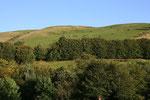 Landschaft zwischen Moffat und Dumfries (Dumfries & Galloway).