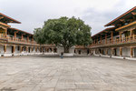 Bodhi-Baum im Punakha Dzong.
