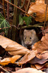 Maus unterhalb des Ansitzes! ;-)