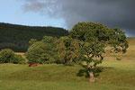 Landschaft nahe Moffat (Dumfries & Galloway).