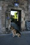 """Ein """"schottischer Bär"""" in der Innenstadt von Stirling."""
