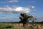 Landschaft nahe Edzell Castle (Grafschaft Angus).