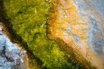 Grün ist eher eine Seltenheit, meist geht die Färbung ins organge-rötliche, braune.