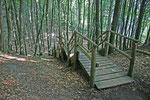 Unser Wanderweg führte uns oft über einen schattigen Waldpfad.