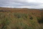 Landschaft im Norden Schottlands.
