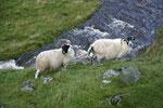 Auf unserer Fahrt von Selkirk nach Dumfries beeindruckte uns vor allem das Moffat Water Valley.