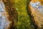 Die unterschiedliche Färbung am Rand des Grand Prismatic Spring wird durch Algen verursacht.