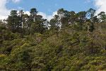 Regelwald bei den Wenthword Falls