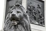 Löwen der Nelsonsäule.