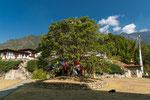 Der Bodhi-Baum des Tempels ist mit Gebetsflaggen geschmückt.
