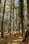 Unsere Wanderung führte uns durch ein schattiges Waldgebiet.